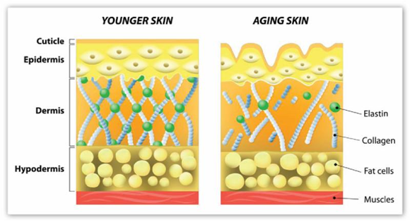 younger-aging-skin